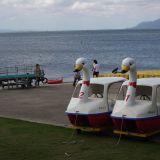 【宍道湖の北側ルート】道の駅のような所にある、魅惑のスワンボート。初めて見ました。